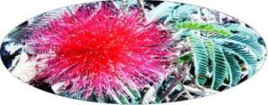 flor by mamcasz